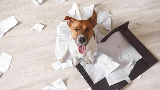 Dog making a mess